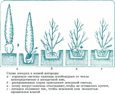 zhiv_07